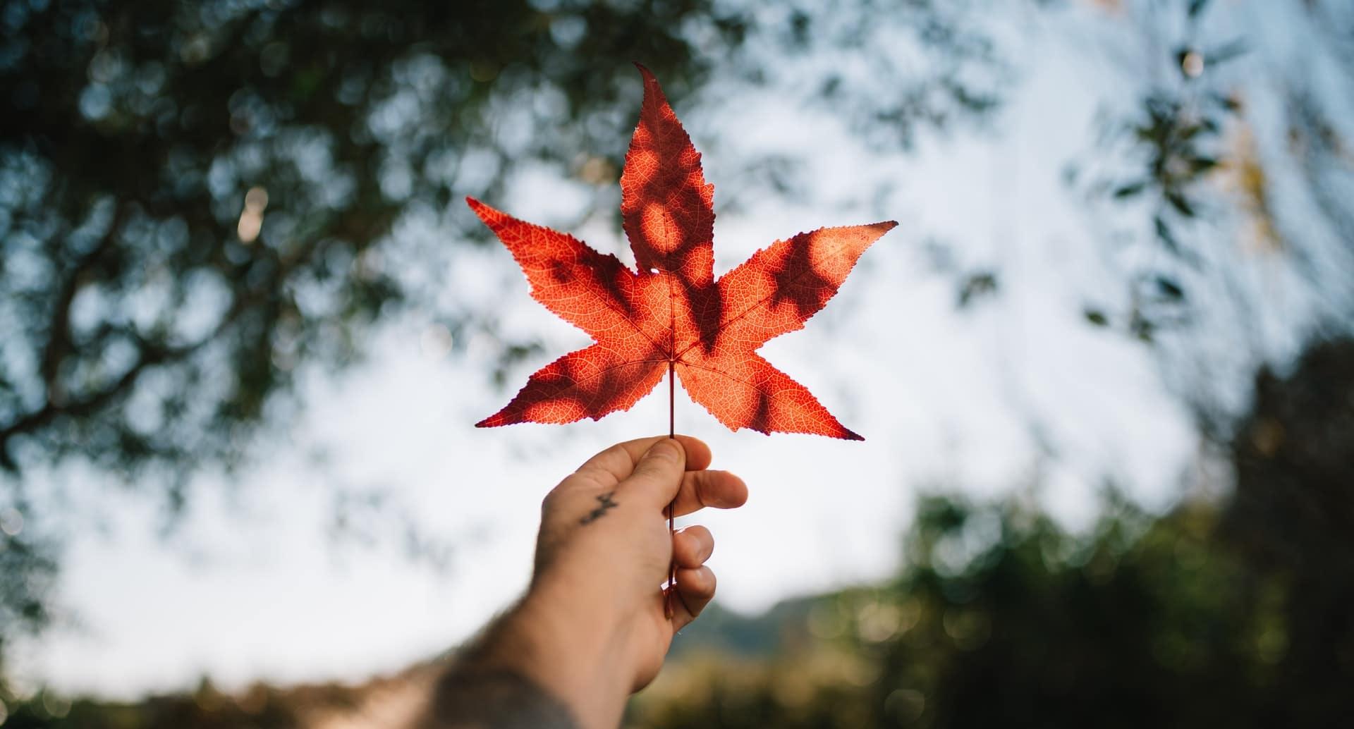 filières pour étudier au Canada.